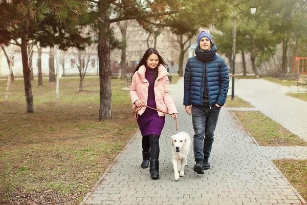 Couple Walking Dog Together